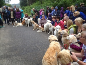 Some of the Golden Retrievers at the unveiling of the Guisichan statue